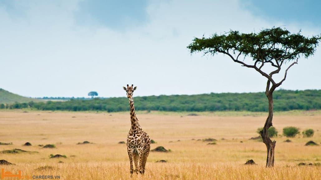 Chiêm ngưỡng những loài động vật hoang dã