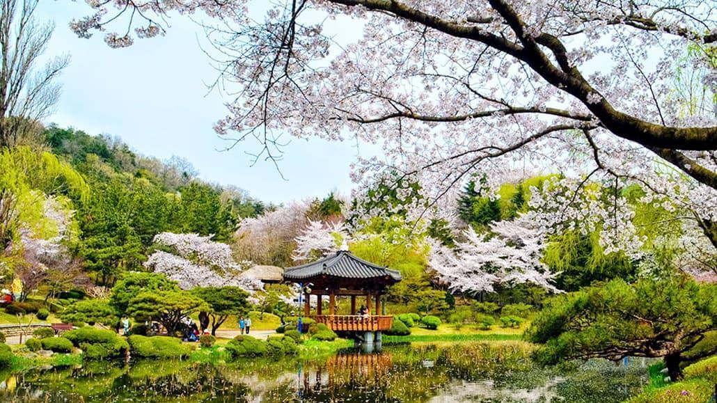 Mùa xuân Hàn Quốc
