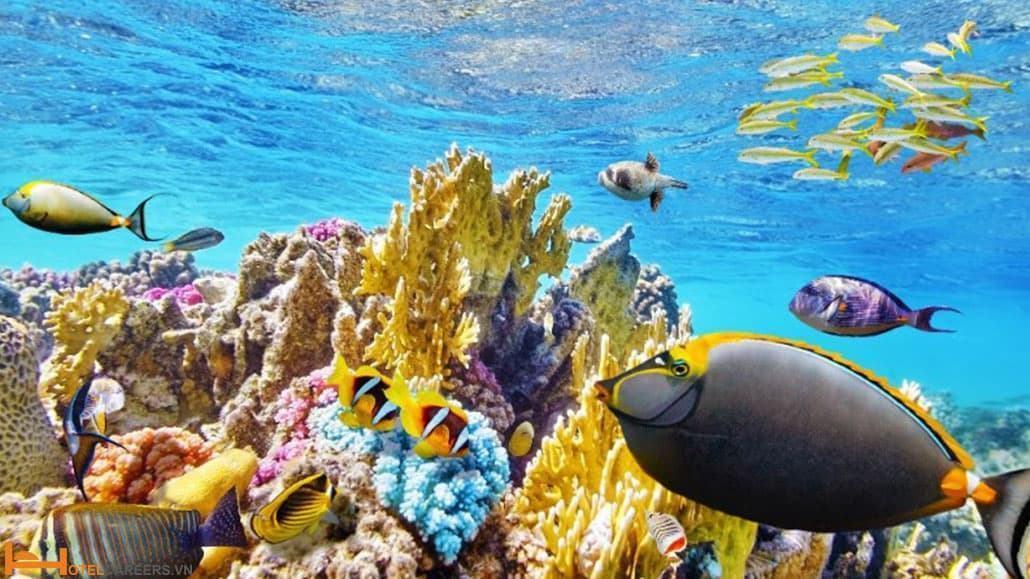 Rạn san hô Great Barrier