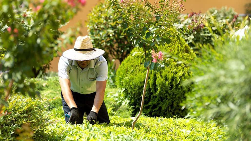 Gardener cần có sức khỏe và chăm chỉ.